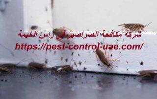 شركة مكافحة الصراصير في راس الخيمة