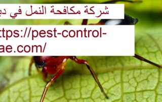 شركة مكافحة النمل في دبي