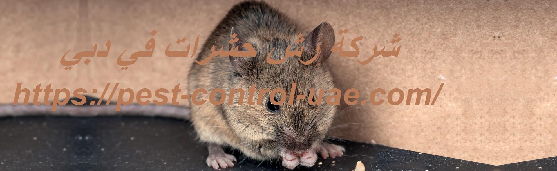 شركة رش حشرات في دبي